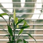 How to Clean Your Blinds Quickly and Efficiently